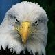 Aguilas de los Mar